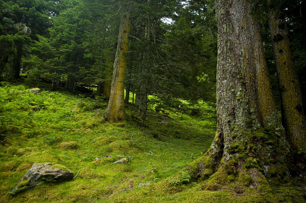 Bosque de Masseys